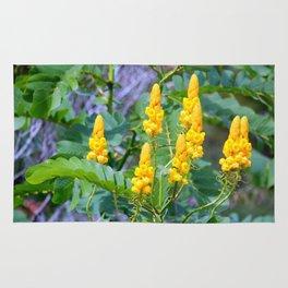 Popcorn Cassia Rug