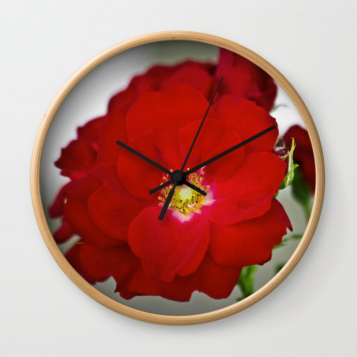 Open Red Shrub Roses Wall Clock