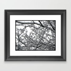 Snow Covered Branches Framed Art Print