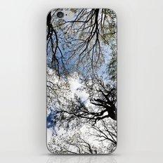 Vertical Trees iPhone & iPod Skin