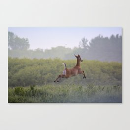 Leaping Away Canvas Print