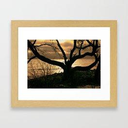 photogenic tree Framed Art Print