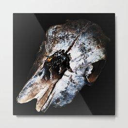 Cow Skull - Painted 0001 . Digital Art . Photograph Metal Print