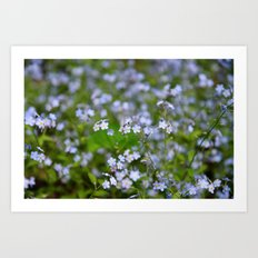 Forget-me-not Close up Art Print