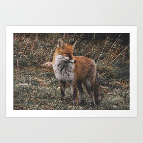 Feelin' Foxy Art Print
