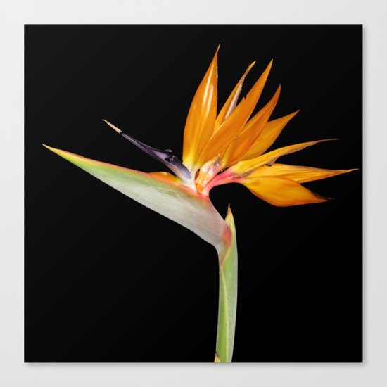 Birds of Paradise Flower Canvas Print