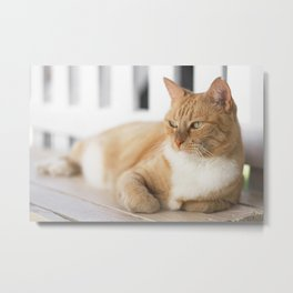 Ginger Cat Relaxing Metal Print