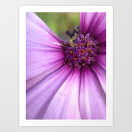 Missing Purple Petal Art Print