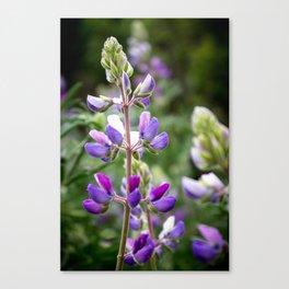 Beautiful Flora Canvas Print