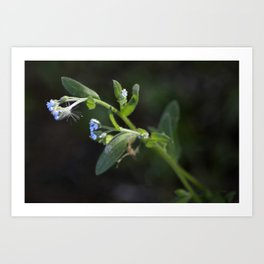 Tiny Blue Flowers Art Print
