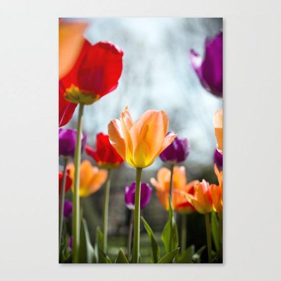 Tulip Dance Canvas Print