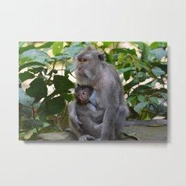 Monkey Mom and Baby Metal Print