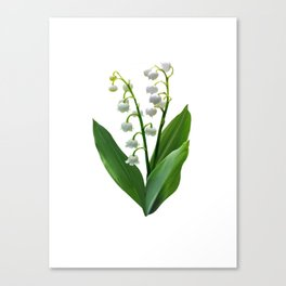 Lily of the Valley Floweret Canvas Print