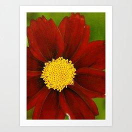 Ruby Coreopsis Art Print