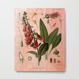 Vintage Botanical Illustration Collage, Foxgloves, Digitalis Purpurea Metal Print