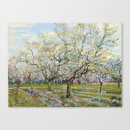 The White Orchard by Vincent van Gogh Canvas Print