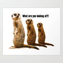 What Are You Looking At?! (Meerkats) Art Print