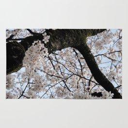 Sakura Blooming (Japan) Rug