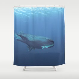 Hangers-on (2 remoras) on a whale shark Shower Curtain
