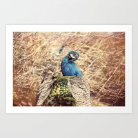Peacock photography blue green brown photography branches immortality royalty Art Print