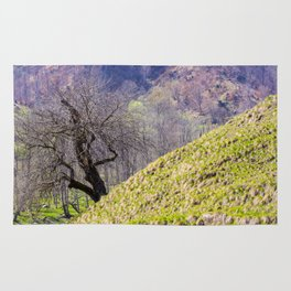The hanging tree Rug