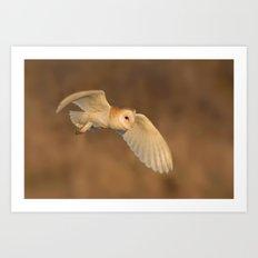Barn Owl in Flight Art Print