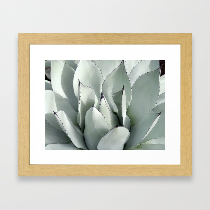 Ornamental Agave Framed Art Print