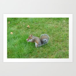 Squirrel and Acorn Art Print