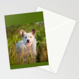 Single white stray tyke dog at the meadow Stationery Cards