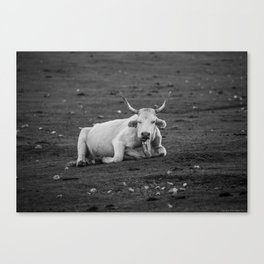 The Grumpy Cow Canvas Print