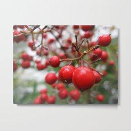 Nandina Berries Metal Print