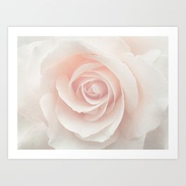Blush Pink Rose Art Print
