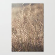 Sunset in the Field Canvas Print