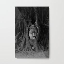 Buddha head in a tree Metal Print
