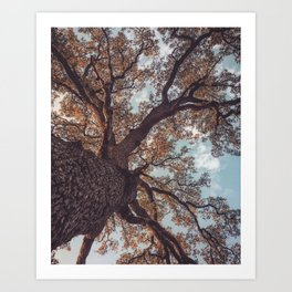 Tree in Fall Art Print