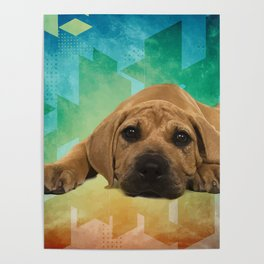 Boerboel puppy - South African Mastiff Poster
