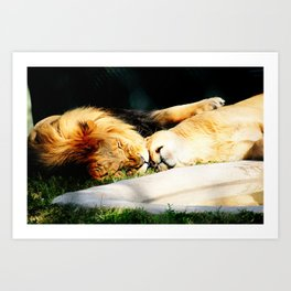 Cat Nap (Jungle Love) Art Print