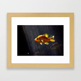 Something Fishy Framed Art Print