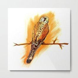 Little hawk Metal Print