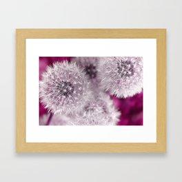 Dandelion pink Framed Art Print