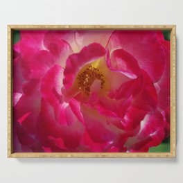 A Rosy Glow - Double Delight Rose Serving Tray
