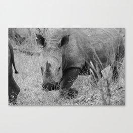 White Rhino Canvas Print