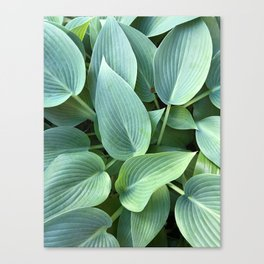 Perfect green leaves Canvas Print
