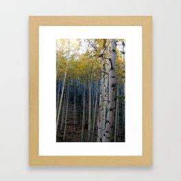 Aspens Framed Art Print