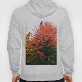 Forest Pallet of Colors Hoody