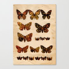 Butterflies and Moths Canvas Print