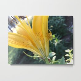 Spider Hides in Plain Sight Metal Print