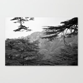 cedars in black and white Canvas Print