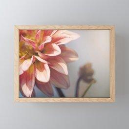 Rosy glow Framed Mini Art Print