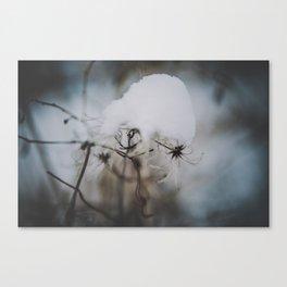 _DSC7058 Canvas Print